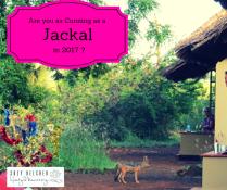 cunning-as-a-jackal